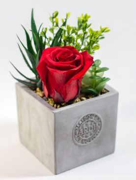 Rosa Preservada pequeña